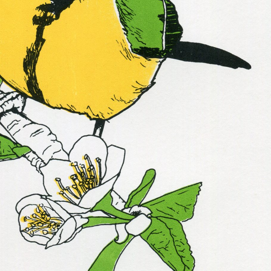 Close-up Great Tit Art print by Things by us